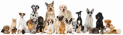 Hospital Vet Veterinary Welcome Yalesville Veterinarian