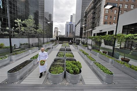 All About Urban Farming In U.s. Cities