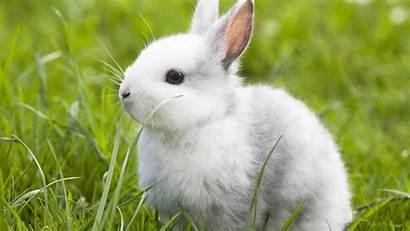Rabbit Bunnies Wallpapers Desktop Wide Wallpapersafari 1080