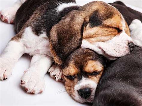 services love bug professional pet care