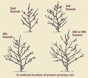 [ Apple Tree Diagram ] - Best Free Home Design Idea ...