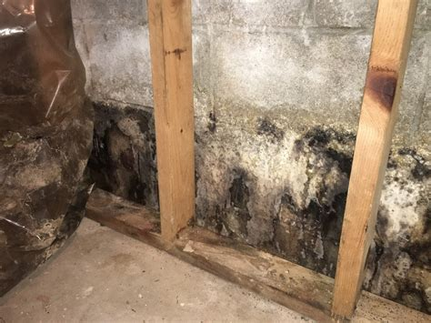 top mistakes  avoid  cleaning mold comprehensive