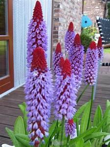 Winterharte Blumen Die Lange Blühen Blumen Und Stauden Im Garten Bl