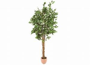 Ficus Benjamini Verliert Alle Blätter : europalms ficus benjamini baum 210cm multi stamm ~ Lizthompson.info Haus und Dekorationen