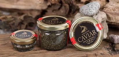 Caviar Sterlet Classic Acipenser Sturgeon Ice