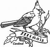 Cardinal Coloring Illinois Bird Printable Ill Pages Getcolorings Sun Bi sketch template
