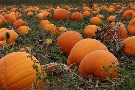 Autumn Pumpkin Wallpaper by Fall Pumpkin Wallpaper For Desktop 57 Images