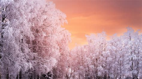 winter forest wallpapers high quality