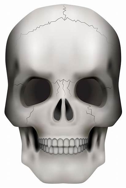 Skull Clipart Skeleton Head Halloween Transparent Background