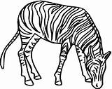 Zebra Coloring Pages Line Clipart Zebras Printable Drawing Clip Super Animal Clipartbest Clipartmag Supercoloring Clker Silhouettes Cliparts sketch template