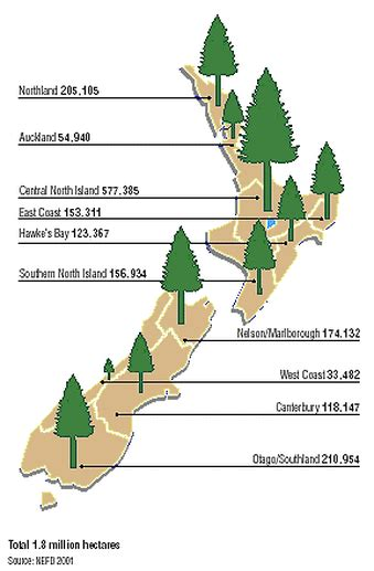 plantation radiata pine  zealand wood prices india