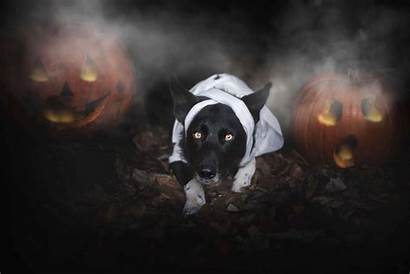 Dogs Scary Halloween Pet