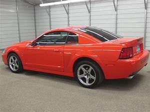 For Sale 04 Comp Orange Cobra