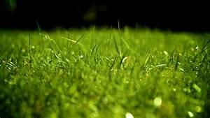 Full HD Wallpaper grass field green blurry, Desktop ...
