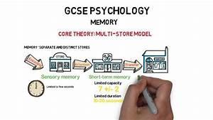 Ud83d, Ude0d, Memory, Model, Psychology, The, Study, Of, Human, Memory, 2019