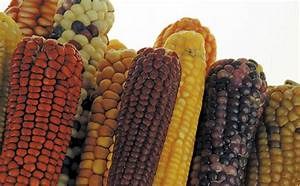 Maize Production In South Africa Pdf