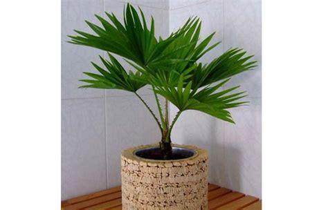 le bureau verte plante d 39 intérieur les palmiers d intérieur plantes d