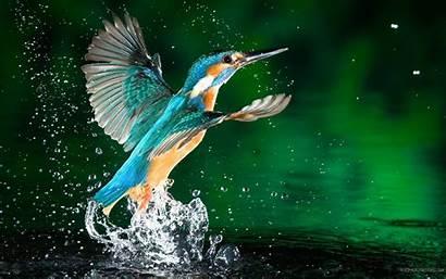 Bird Desktop