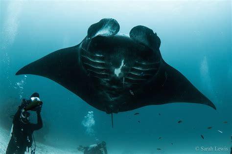 top   places  dive  manta rays diviac magazine