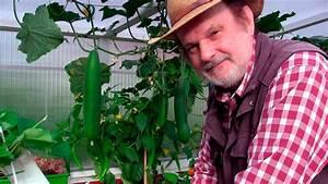 Gurken Im Hochbeet : hochbeet traum hochbeet im jahreslauf salat blumenkohl gurken tomaten film 42 youtube ~ Orissabook.com Haus und Dekorationen