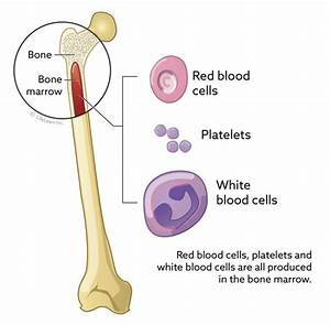 Bone Marrow Collection And Examination