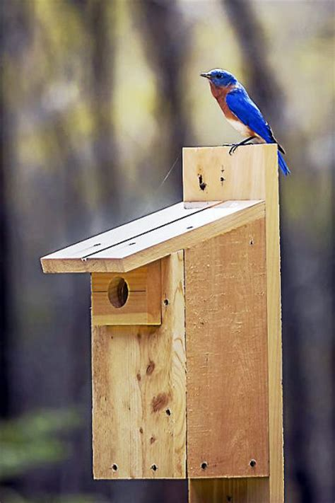 bluebird nest box building workshop hosted  flanders