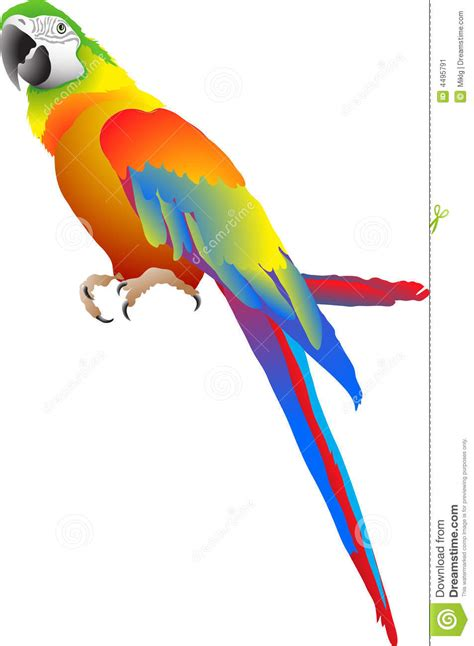 parrot stock vector illustration  close blue nature