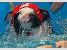 Sportliches Schwein