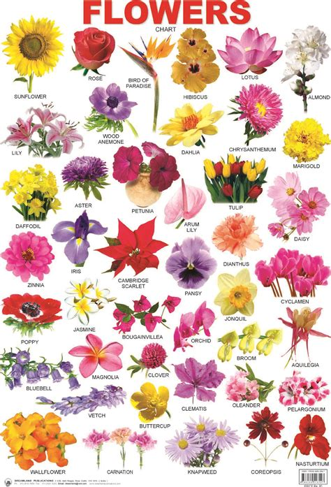 image of all flowers all flowers names www imgkid com the image kid has it