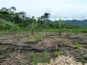 deforestation | Gone to the Amazon