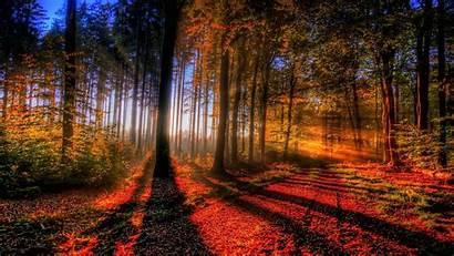 Forest Nature Trees Landscape Desktop Backgrounds Wallpapers