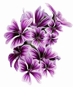 File:Malva sylvestris (Mallow stylized flowers).png ...