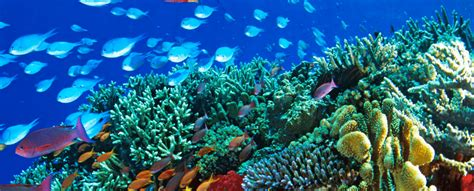 You may never see a beautiful coral reef by 2070 - Scientific Scribbles
