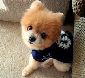Cutest Non Shedding Small Dogs by Best Short Hair Dogs Dog Pet Photos Gallery D1byrm0kq6