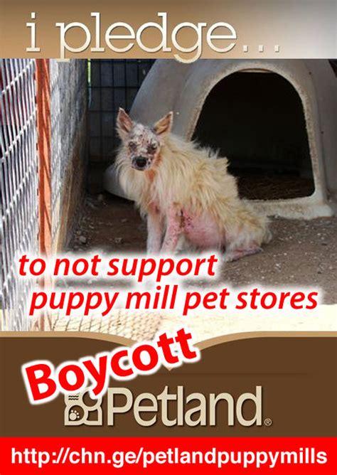 Petland Usa Social Media Action Dancing Dog Blog