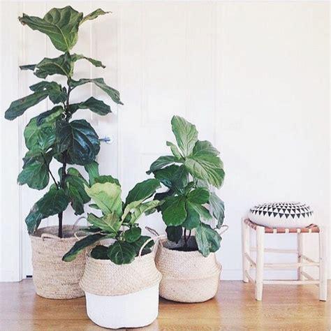 indoor flower garden 15 indoor plant display ideas that are borderline genius planters rice and plants