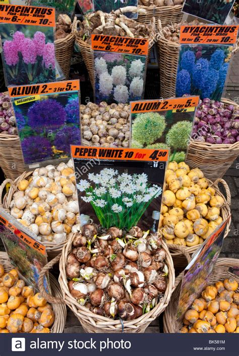 flower bulbs image titled get tulip bulbs step 5 how to