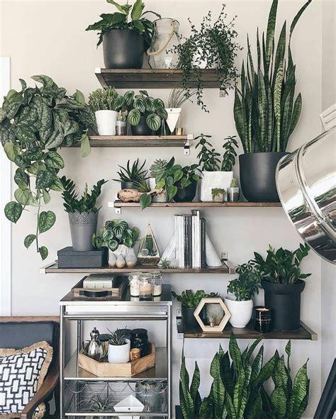 living room plants ideas  pinterest