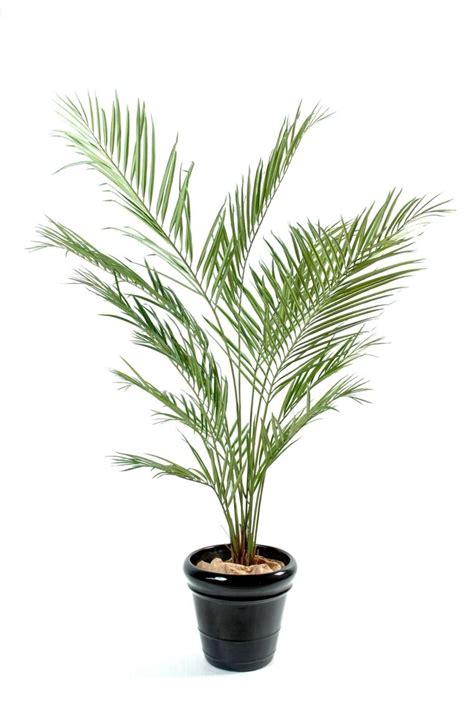 plantes verts d interieur plantes vertes d int 233 rieur la nature dans notre quotidien