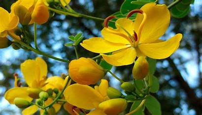 Yellow Flowers Wallpapers Definition Backgrounds Wallsdesk