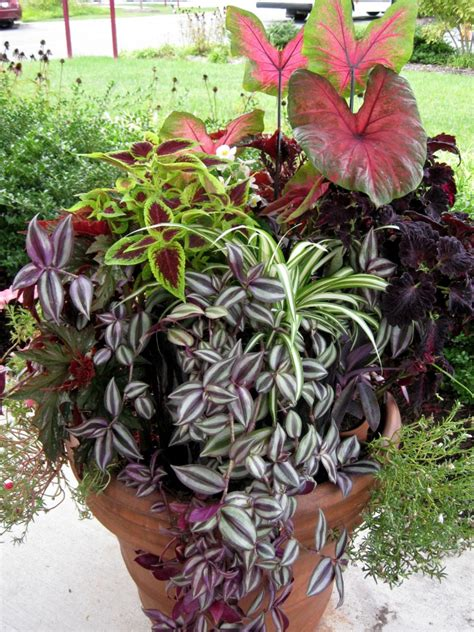 Partial Shade Container Garden; Indoor Tropicals And