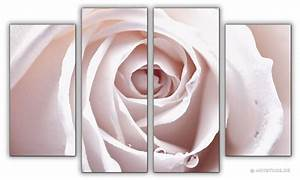 Wandbilder Xxl Mehrteilig : wandbilder jack dyrell rosa rose kunstdrucke leinwand keilrahmen ~ Markanthonyermac.com Haus und Dekorationen