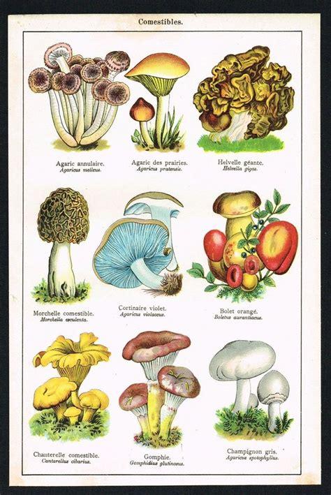 motif mushrooms images  pinterest fungi