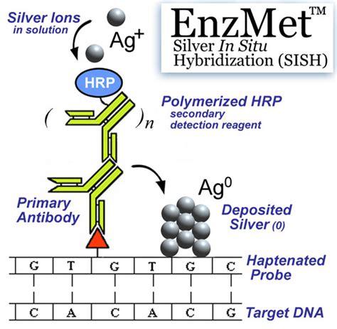 enzmet  silver   hybridization sish  breast