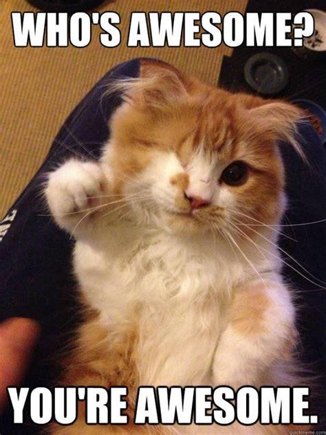 Thank You Cat Meme - cat thanks meme buscar con google baking