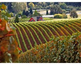 wine country pictures yamhill county oregon wine country