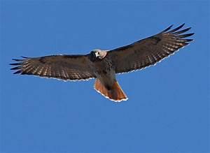 Quaternary Consumer Animals | www.imgkid.com - The Image ...
