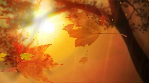 Autumn Animated Wallpaper - leaf fall animated wallpaper http www desktopanimated