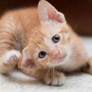 Flöhe Bei Katzen Bekämpfen : katzenfl he bek mpfen haut und fell info beratung animigo ~ Orissabook.com Haus und Dekorationen