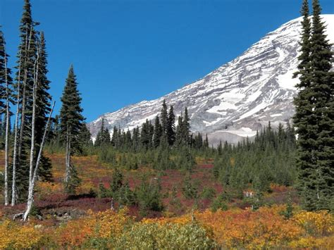 Autumn Colors At Mount Rainier National Park